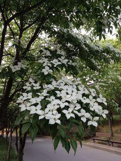 여의도의 꽃
