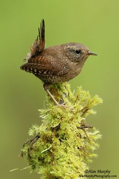 www.alanmurphyphotography.com Animals Images, Cute Animals, Booby Bird, Animal Mugs, Colorful Birds, Wildlife Art, Wild Birds, Bird Watching, Bird Art