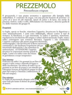 Prezzemolo (Petroselinum crispum) Aromatic Herbs, Medicinal Herbs, Natural Life, Natural Health, How To Stay Healthy, Healthy Life, Healthy Herbs, Keto Nutrition, Health Eating