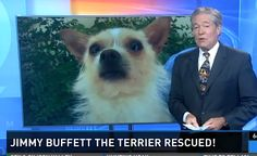 """Terrier Named """"Jimmy Buffet"""" Rescued From Island"""
