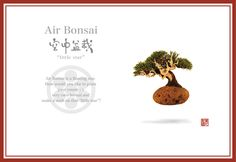 星人空中盆栽園 | Hoshinchu Air Bonsai Garden - Welcome to Hoshinchu website""