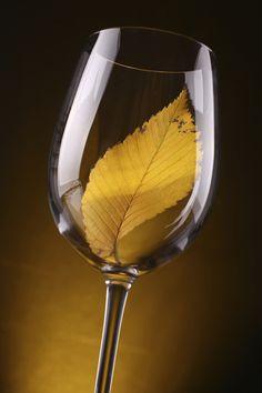 Mr. Vino: de allerlekkerste herfst wijnen