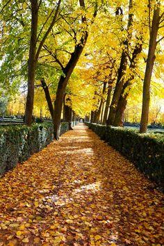 Aranjuez, Spain #Gardens #Park #Trees #Autumn #Fall