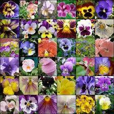 Risultati immagini per tessuti con fiori violette