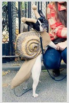 FrenchBulldog-Snail