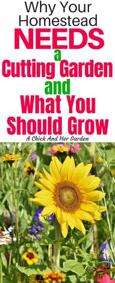 tips for the entire family. Organic gardening tips and flower garden t., Gardening tips for the entire family. Organic gardening tips and flower garden t., Gardening tips for the entire family. Organic gardening tips and flower garden t. Cut Flower Garden, Flower Garden Design, Flower Gardening, Flowers For Cutting Garden, Balcony Gardening, Kitchen Gardening, Urban Gardening, Urban Farming, Flower Farm