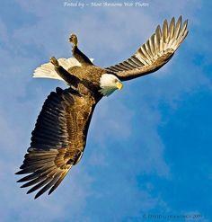 Eagle Aerobatics ~ David Hemmings