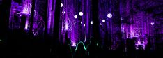 Experience Vallea Lumina in Whistler, a new and spectacular multimedia light show and night walk in pursuit of hidden wonders. Steep Staircase, Sunset Hours, I Love The World, Summer Dates, Flash Photography, Sunday Night, Online Tickets, Whistler, British Columbia