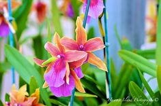Orchids In Color