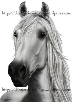 Dibujo digital: cabeza de caballo