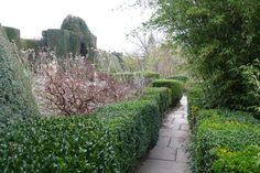 Great Dixter: yew and box hedging bringing volume, height and definition, whilst leading you on through the garden and hinting at vistas beyond. This evergreen framework adds quiet formality to the changing seasonal character of the herbaceous planting.