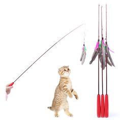 RunHigh Feather Wand Cat Toy Retractable Teaser Cat Catcher Exercising Kitten or Cat -- Read more reviews of the product by visiting the link on the image. (This is an affiliate link and I receive a commission for the sales)