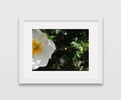 INSTANT DIGITAL DOWNLOAD  Flower 8x10 White & by CleopatrasPearls