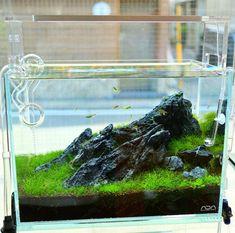 Aqua Aquarium, Cichlid Aquarium, Home Aquarium, Aquarium Design, Aquarium Fish Tank, Planted Aquarium, Aquariums, Aquascaping, Fish Tank Terrarium