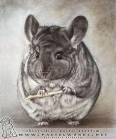 65 Best Chinchilla images | Chinchillas, Exotic animals ...