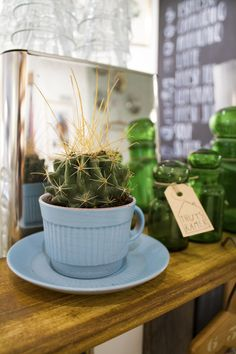 Cactus and blue coffee cup - Thuyskamer