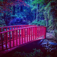 Enjoy this unique & serene garden any time of the year.  #MiyazakiJapaneseGarden #miyazaki #Japanese #garden #Japan #city #relationship #stone #bridge #park #waterfall #fish #pond #trail #shelter #flowers #trees #birds #amazing #beautiful #scenic #quiet #peace #instabeauty #instadaily #picoftheday #beach #virginiabeach #filter #pic by jdavidhillery
