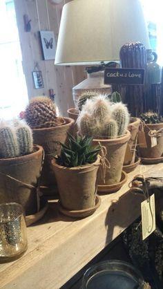 Cactus in store