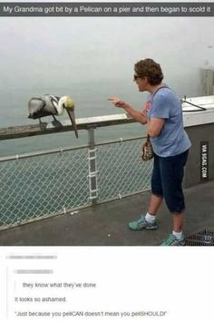 40 Hilarious Pictures