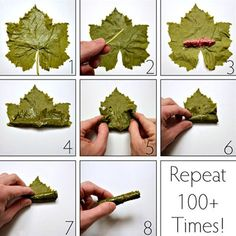 How to make dolmades with fresh grape leaves And Repeat steps 1000 times! Sarma ve dolma – The Most Practical and Easy Recipes Lebanese Cuisine, Lebanese Recipes, Turkish Recipes, Greek Recipes, Ethnic Recipes, Comida Armenia, Wine Leaves, Albanian Recipes, Albanian Food