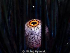 Big Brother's eye. by Michal Rysniak