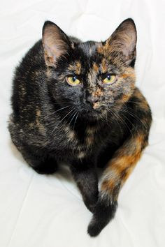 Tortie with a 'tude'
