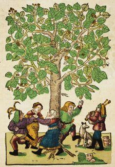 Hieronymus Bock (1498-1554) German botanist. His 1546 herbal had 550 woodcuts by David Kandel. Lime Tree - Pinterest