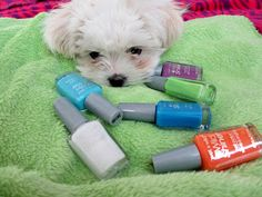 Hot Glue & Sparkle: Wet n Wild LE Pop Art Craze nail polish collection: review and swatches
