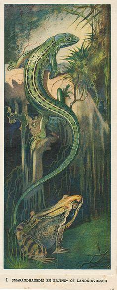 Zeewateraquarium en terrarium 1930 ill pag 83