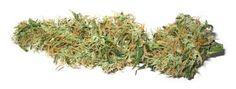 Risultati immagini per marijuana