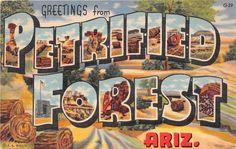 *m. Petrified Forest Arizona. J. R. Willis