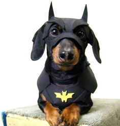 costumes for dachshund - Google Search