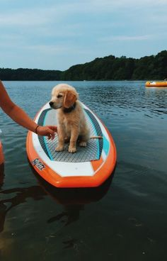 Find Out More On The Outgoing Golden Retriever Puppies Perros Golden Retriever, Chien Golden Retriever, Golden Retrievers, Retriever Puppies, Labrador Retriever, Cute Baby Animals, Animals And Pets, Funny Animals, Cute Dogs And Puppies