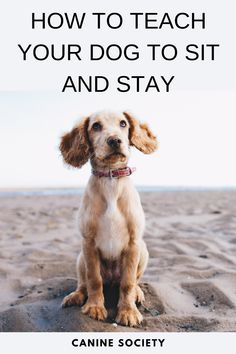 How To Teach a Dog To Sit And Stay Now, when your buddy wants to jump up to greet you, tell him to sit down. When he does, praise him, scratch him under the chin and release him afterward. Consistently following this simple method, you can change the greeting behavior of your dog from trying to jump on you to sit to be petted. Dog Commands, Puppy Care, Hacks, Training Your Dog, Dog Supplies, Dog Life, Dog Toys, Small Dogs, Best Dogs