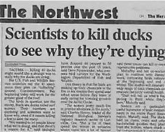 40 Newspaper Headlines That Push The Limits Of Human Stupidity - Funtertainments Funny News Headlines, Newspaper Headlines, Headline News, Newspaper Funnies, Funny Ads, Funny Signs, Stupid Funny, Funny Stuff, Hilarious
