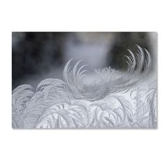 """Trademark Art 'February Window Frost' by Kurt Shaffer Photographic Print on Wrapped Canvas Size: 30"""" H x 47"""" W x 2"""" D"""