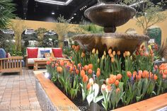 El Patio Fuente, by Treeline Designz Design Company and built by Calluna's Gardens incorporated a lot of tulips and a full sized fountain in its warm-hued design. 360 Design, Garden Show, Bulbs, Fountain, Gardens, Patio, Display, Warm, Flowers