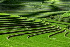 Bali rice terraces - 16 surreal landscapes found on Earth All Nature, Amazing Nature, True Nature, Places To Travel, Places To See, Places Around The World, Around The Worlds, Rice Terraces, Denpasar