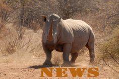 March Rhino News Summary  images
