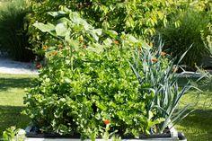 Grădinăritul biointensiv - gardenbio.ro Plants, Plant, Planets