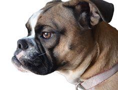 A New Virus Threatens Dogs: Circovirus