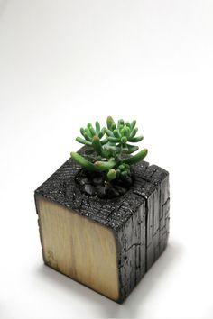 Материал: сосна / Material: pineПокрытие: глянцевый лак / Coating: gloss lacquerСуккулент / Succulent: Sedum pachyphyllum (hybrid)Размер ШхВхГ / Size: WxHxD 100 x 100 x 100 mm