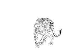 Leopard in a fine art BW print