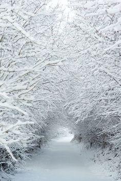 A wonderland walk, and enjoying the beauty.