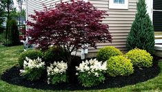 30 Landscaping Ideas Small Front Yard Landscaping, Landscaping Trees, Front Yard Design, Modern Landscaping, Outdoor Landscaping, Landscaping Design, Inexpensive Landscaping, Florida Landscaping, Landscaping Borders