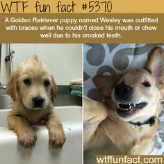 """Puppy wearing braces - Faith In """"VET'S"""" Restored!  ~WTF! awesome fun facts"""