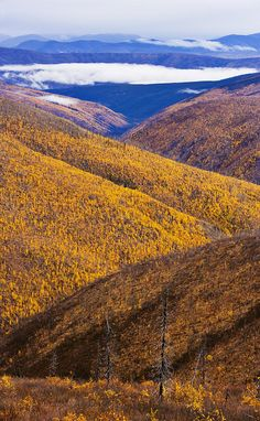 Fall colours along Top of the World Highway.