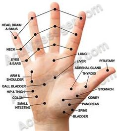Pressure Points to Knock Someone Out - Bing images