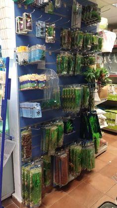 Aquarium, Goldfish Bowl, Aquarium Fish Tank, Aquarius, Fish Tank