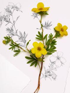 #EcoBeauty, está elaborado con ingredientes 100% naturales que cuidan tu delicada piel. Eco Beauty, Natural, Sweden, Herbalism, Flowers, Plants, Products, Skin Care, Cards